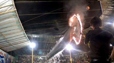dolphin circus flames