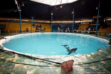 dolphin indonesia circus