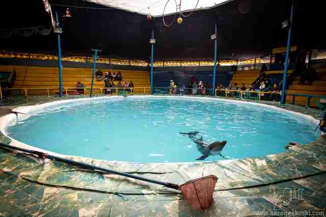 dolphin indonesia circus