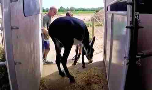 Neglected donkey arriving at rescue center in Spain