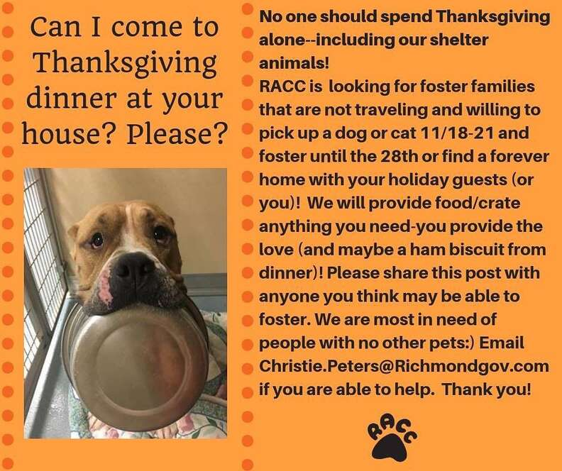 dog rescue thanksgiving