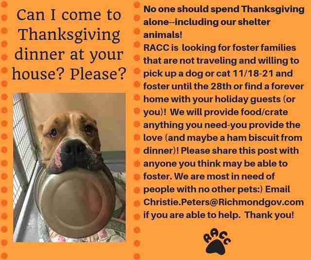 dog rescue thanksgiving