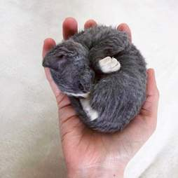 tiny kitten doesn't even look real