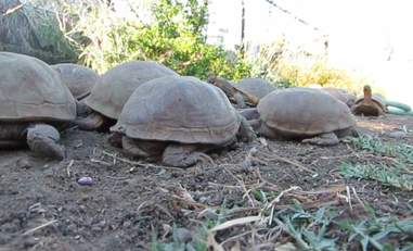 Rescued turtles at rescue center in Malibu