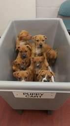 puppy cart puppy