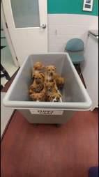 puppy cart puppies