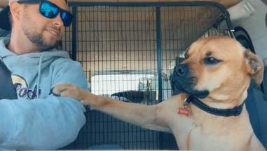 Stanley the dog demands pets from his adopter