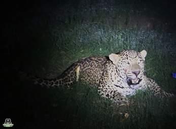 leopard car india