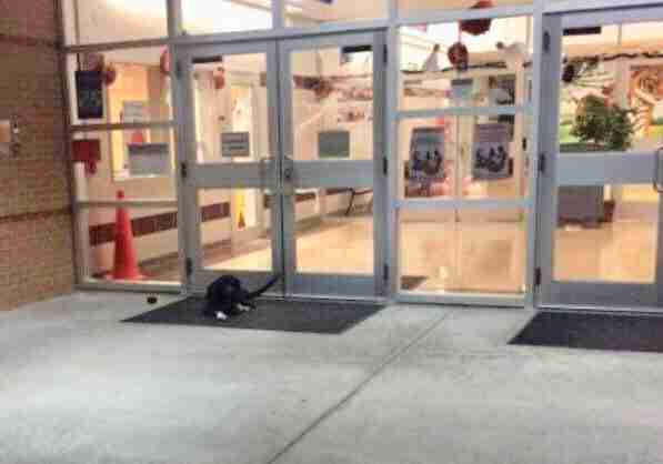 clive dog waits outside houston school