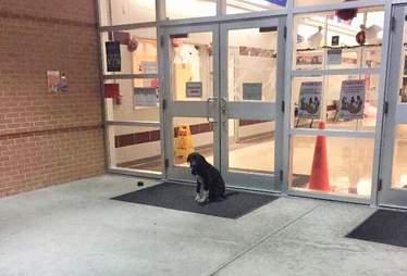 clive dog waits outside houston school