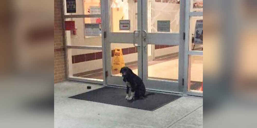 Dog Waited Outside School Every Morning Until Someone Helped Him