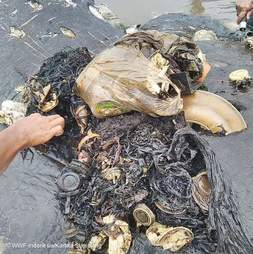 Plastic items found in dead whale