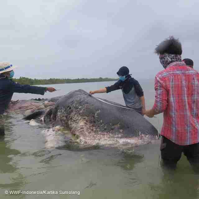 People standing around dead whale