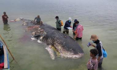 People examining dead whale