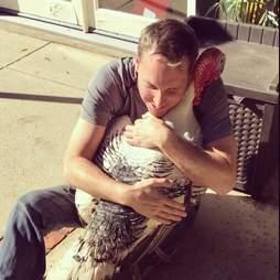 rescue turkey california