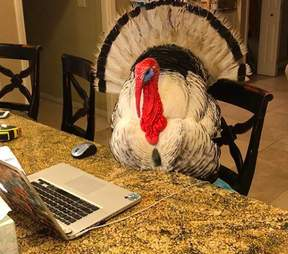 albert rescue turkey