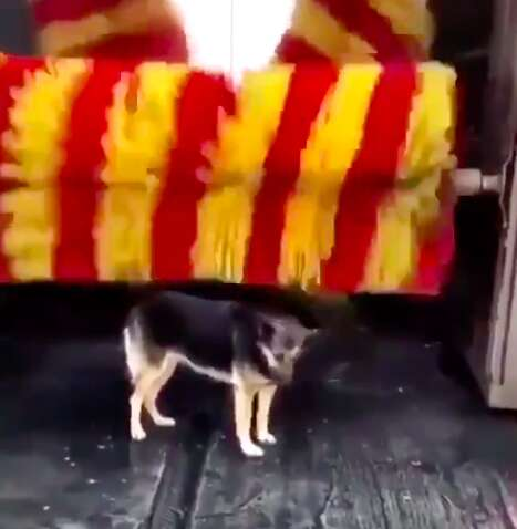 Linda the stray dog gets brushed at car wash in Turkey