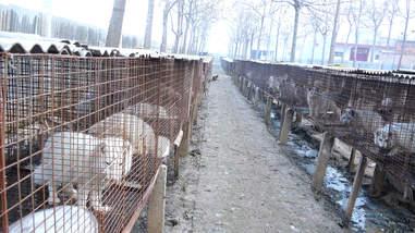 fur farm china