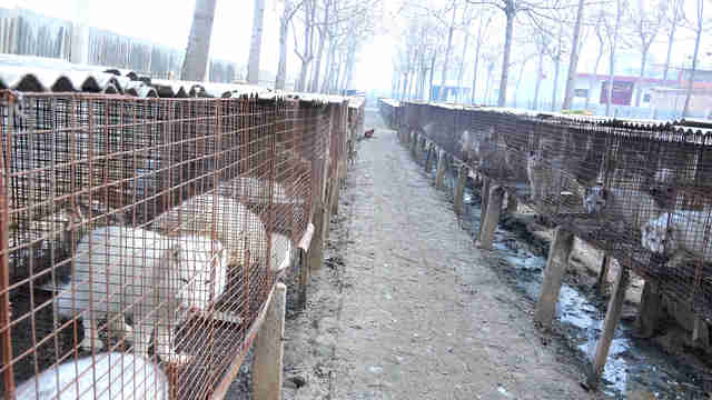 fur farm china