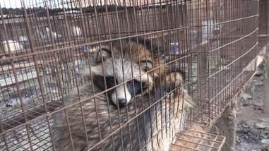 fur trade china