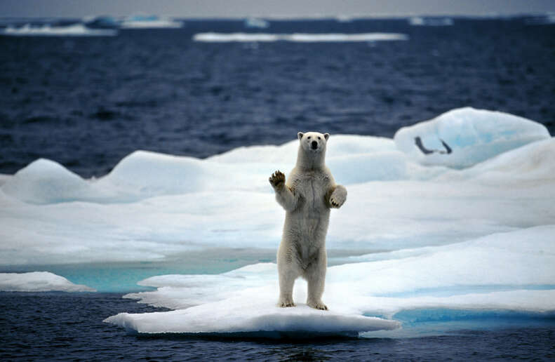 Arctic ocean on the North Pole