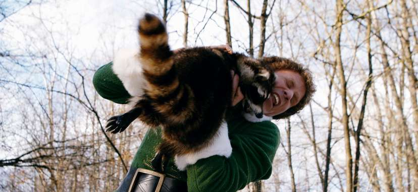elf movie raccoon