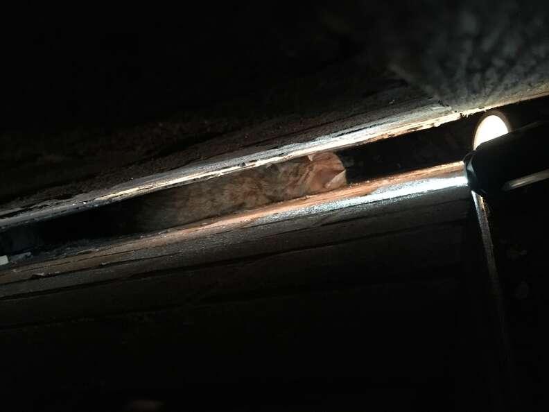 cat stuck between two walls