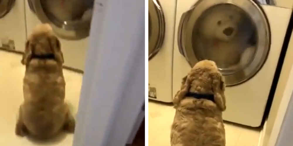 Sweet Dog Offers Moral Support To His Favorite Toy During Wash Time