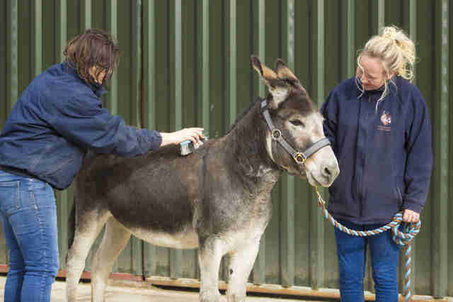 Abandoned donkey with overgrown hooves rescued in Ireland