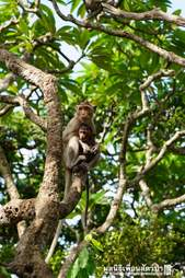 Wild baby monkey found drunk gets rehabbed and reunited with family in Thailand