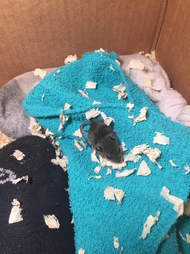 rescue mouse