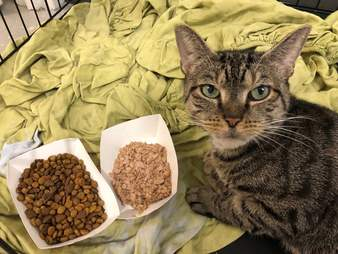 Sage the cat adjusts to life at an animal shelter in New York
