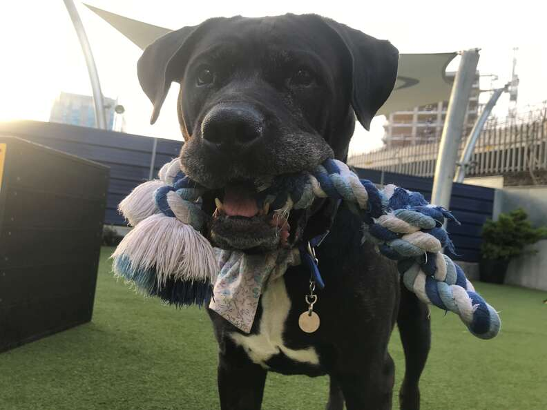 dog returned to shelter after 8 years