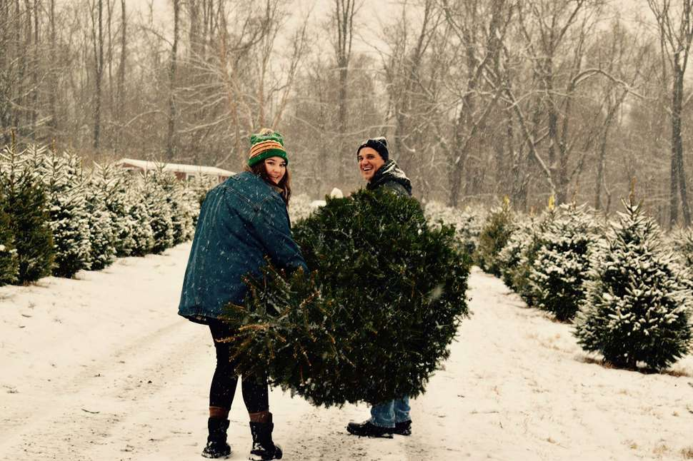 Christmas Tree Farm - Best Christmas Tree Farms Near NYC: Where To Get A Tree In NJ, CT