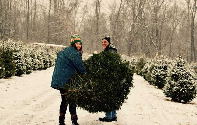 The Best Christmas Tree Farms Near NYC