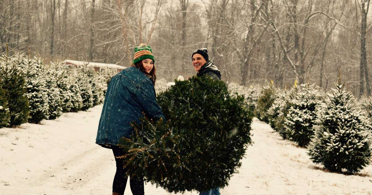 c00935fd842 Best Christmas Tree Farms Near NYC  Where to Get a Tree in NJ