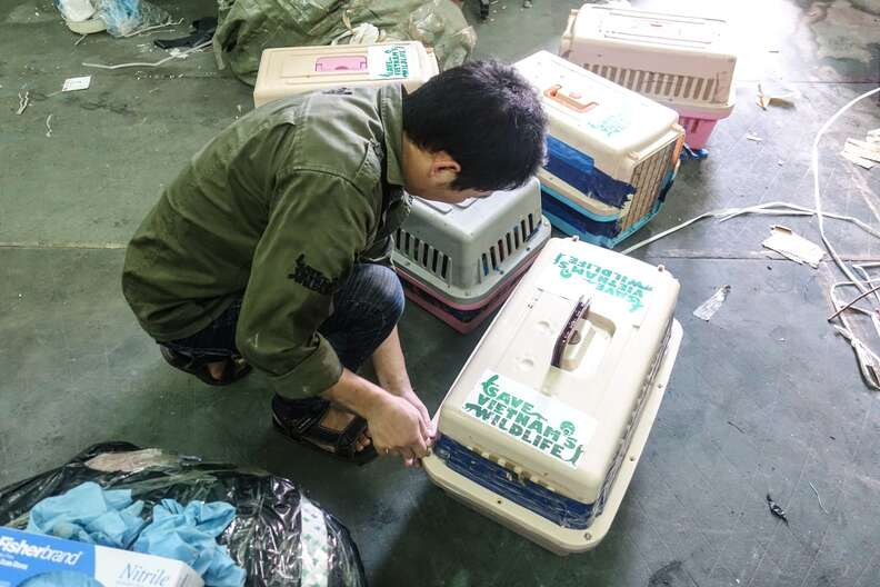 Wild otters confiscated from trafficker in Vietnam