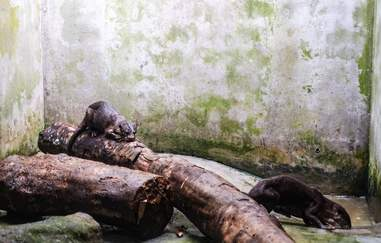 Wild otter confiscated from trafficker in Vietnam
