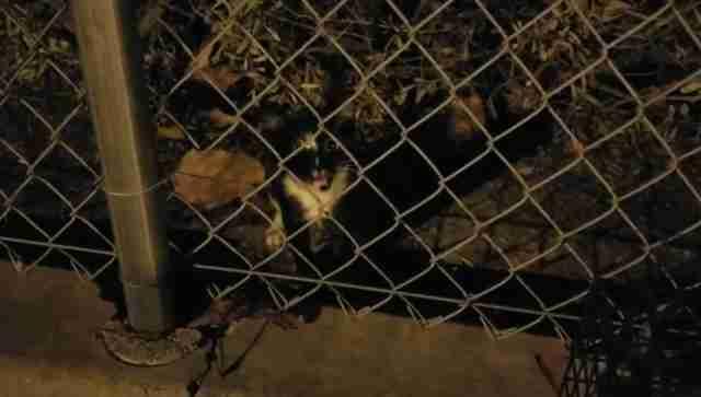 stray kitten