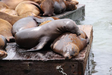 Sea lions cuddling together on dock