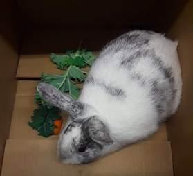 rabbit rescue new york