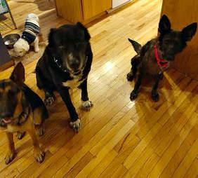dog rescue pennsylvania