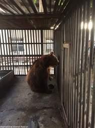 Bear alone inside metal cage