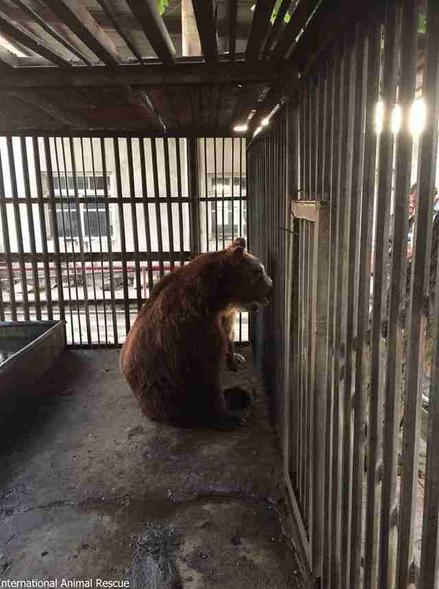 Bear alone inside metal cage