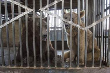 Bears locked up in cage at bus depot