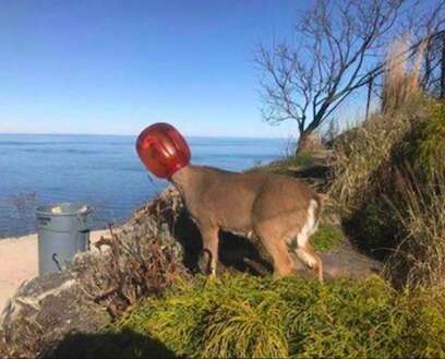 deer rescue long island