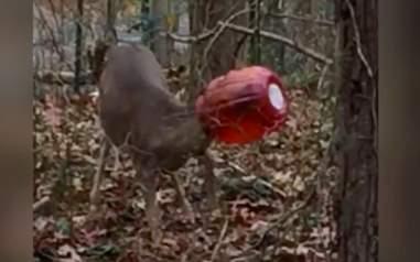 deer rescue long island new york
