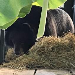 Bear saved from bile farm in Vietnam
