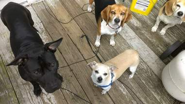 Dogs standing out on outside deck