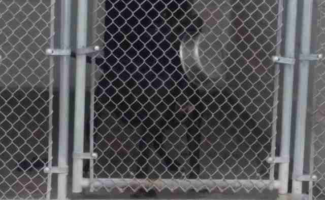 Dog locked up in kennel
